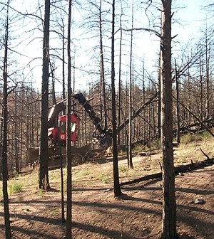 The feller-buncher is used to cut down and bundle useable timber. (Credit: Joe Wagenbrenner)