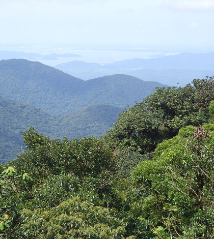 Tropical forests are absorbing more carbon dioxide. (Credit: Deyvid Setti, via Wikimedia Commons/CC BY 3.0)