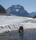 Joe Giersch sets an insect sampling net in a Glacier National Park stream. (Courtesy Joe Giersch)