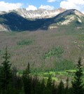 Extensive bark beetle damage in Rocky Mountain National Park. (Credit: Tim Wilson/CC BY 2.0)