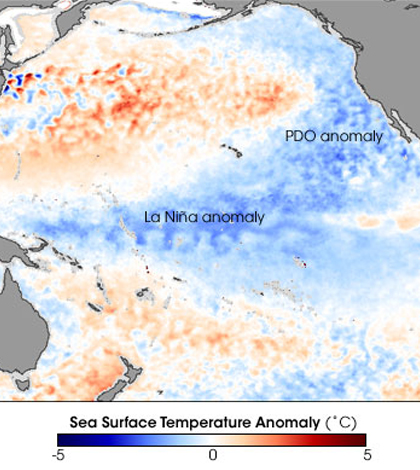 The Pacific Decadal Oscillation forms a cooler horseshoe of water in the northeastern tropical Pacific. (Credit: NASA Earth Observatory)