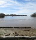 A levee along the Cosumnes River. (Credit: Joshua Viers / UC Merced)