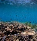 Researchers are pushing for stronger management to protect iconic ecosystems like the Great Barrier Reef. (Credit: Ed Roberts)