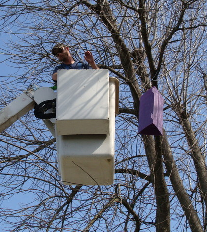 Scientists hope to trap invasive emerald ash borers for study. (Credit: University of Arkansas)