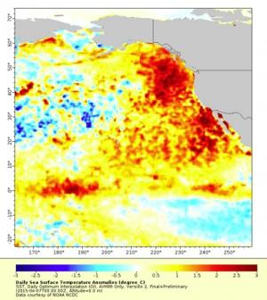 the blob pacific ocean