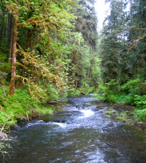 A forested Oregon stream (Credit: Kristine/CC BY-ND 2.0)