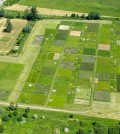 ecosystem multifunctionality / The study examined biodiversity experiments on land, such as this manipulated grassland in Germany, as well as underwater. (Credit Dr. Nico Eisenhauer)