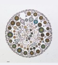 Diatoms are intricate single-celled algae. (Credit: California Academy of Sciences)