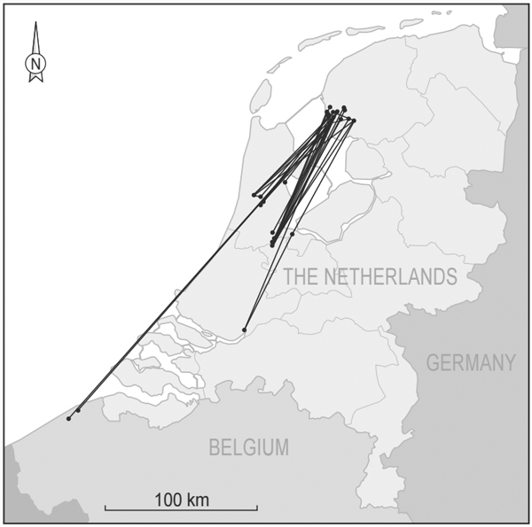 dutch godwits / Some of the studied godwits made reverse migrations of more than 250 kilometers to avoid the three-week cold snap. (Credit: Nathan Senner via Journal of Animal Ecology)