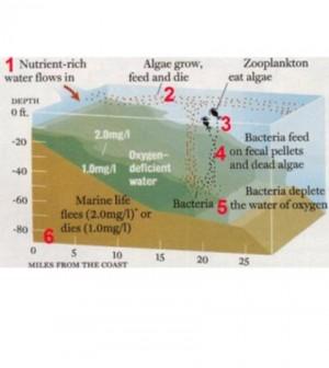 Nutrient-based hypoxia formation. (Credit: Nancy Rabalais / LUMCON)