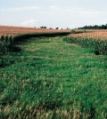 A grassed waterway in Cherokee County, northwest Iowa. (Credit: Lynn Betts / USDA Natural Resources Conservation Service)