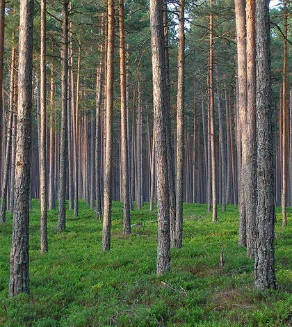 essays on climate change and forest management Instability and uncertainty are the new driving forces when it comes to land management climate change climate change is climate change is.