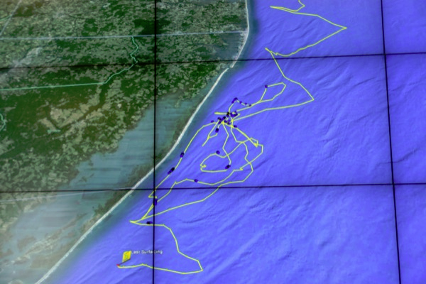 A map shows the path of a shark along the Delmarva coast. (Credit: University of Delaware)