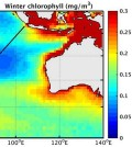 Average chlorophyll in the Indian ocean, taken from satellite. (Credit: CSIRO)
