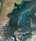 The MODIS instrument onboard NASA's Terra satellite scans for the characteristic green of chlorophyll to detect phytoplankton blooms. (Credit: NASA Earth Observatory)