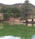 Toxic Microcystis algae grow in a large bloom in the Copco Reservoir on the Klamath River, posing health risks to people, pets and wildlife. (Courtesy of Oregon State University)