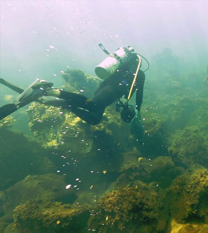 Algae-covered habitat dominates areas off the Maug Islands in the Pacific Ocean that are close to underwater volcanic vents that spew carbon dioxide. New research shows that concentrations of carbon dioxide in seawater around the vents drives a shift from healthy coral to algae-covered habitat. (Credit: Stephani Gordon / Open Boat Films / NOAA)