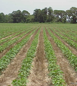 strip-till farming Researchers find that strip-tilling yields better crops. (Credit: Soil Science/CC BY 2.0)