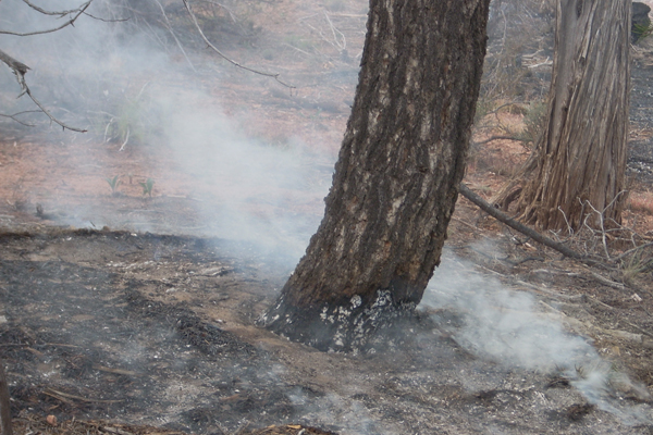 A smoldering tree. (Credit: Mary Miller, Michigan Tech Research Institute)