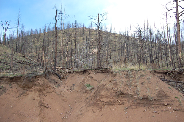 Land subsidence following the 2002 Hayman Fire near Denver, Colorado. (Credit: Mary Miller, Michigan Tech Research Institute)