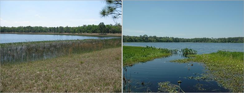Though only a mile apart, Barco Lake (left) and Suggs Lake (right) are drastically different in composition. (Credit: National Ecological Observatory Network)