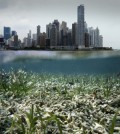 The coral reefs, mangroves and seagrasses that support marine food webs are in decline. (vilaincrevette / Fotolia)