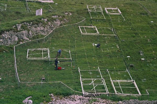 Grassland plots at Buxton Climate Change Impacts Lab, summer 2009, showing aluminium rain shelter frames. (Credit: Raj Whitlock / University of Sheffield)
