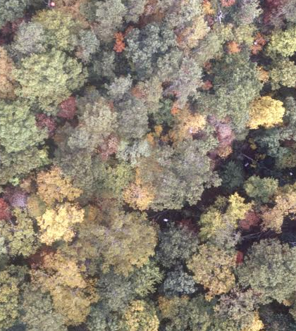 Trees in Southeastern forests may experience a shift in species due to more frequent droughts. (Credit: Duke University)