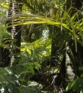 Rain forest. (Credit: rosinakaiser/CC0 Public Domain)