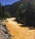The Animas River between Silverton and Durango in Colorado, within 24 hours of the 2015 Gold King Mine waste spill. (Credit: Riverhugger via Creative Commons 4.0)