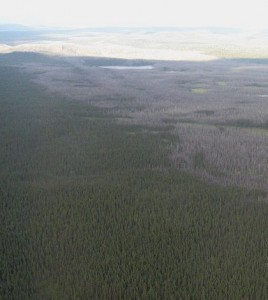 Boreal forest fire from 2007. (Credit: Colocho/CC BY-SA 3.0)
