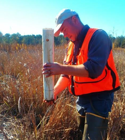 One of the low salinity tidal forest wetlands (dominated by baldcypress trees) along the Waccamaw River. (Credit: Matt Ricker, Bloomsburg University)