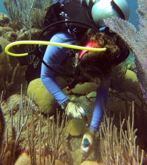 Clark U. Juvenile Coral Research May Help Save Threatened ...