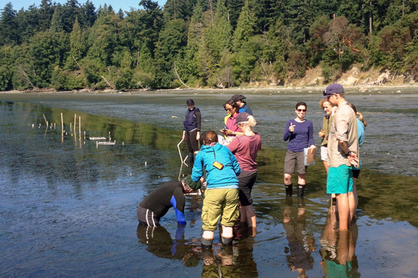 Students in the Ecology of Infectious Marine Diseases course working in the field. (Credit: Allison Tracy / Cornell University)