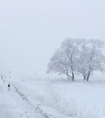 Frozen trees near a road. (Credit: Larisa Koshkina)