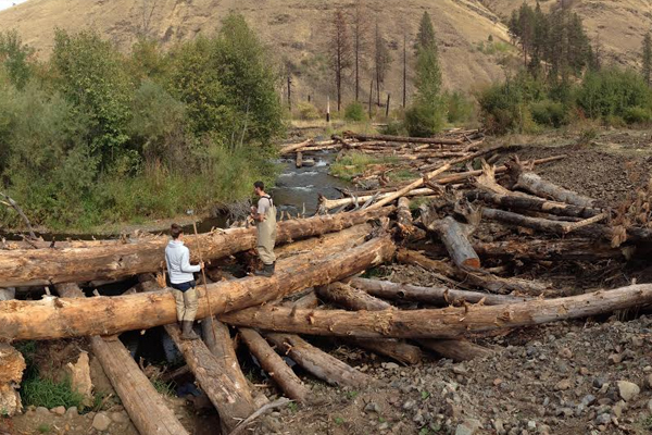 Restored log jams on the Tucannon River, Washington. (Credit: Alexander Fremier)