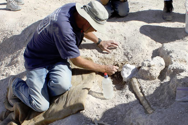 Quintin Lake collects mammoth rib bones. (Credit: Kathleen Springer)