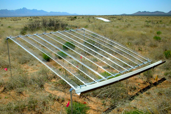 The researchers created 50 study plots in the Chihuahuan desert in New Mexico, at the Jornada Long Term Ecological Research site. (Credit: Osvaldo Sala / Arizona State University)