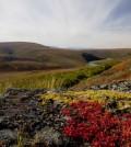 Alaskan tundra landscape. (Credit: Ken Tape)