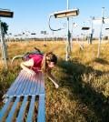 Elizabeth Carlisle checks soil microbes in a +Heat plot. (Credit: Danny Walls)