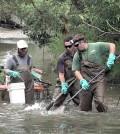 Ohio EPA staff collect fish to monitor stream nutrient levels. (Credit: Ohio EPA)