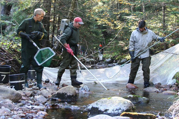 Bruce Connery, Matt O'Donnell and Ben Letcher netting fish using a Smith Root backpack electroshocker at Stanley Brook in Acadia National Park. (Credit: U.S. Geological Survey)
