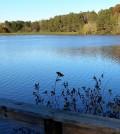 Lake Herrick. (Credit: Thalika Saintil / University of Georgia)