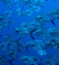 Researchers are investigating how carbon dioxide levels are affecting marine life. (Credit: Public Domain)