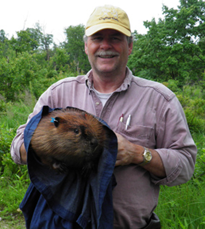 Peter Busher at Boston University uses wire mesh traps to catch beavers; he then transfers them to a denim bag like this one to obtain hair samples for DNA analysis. (Credit: Macauley Mathieu-Busher)