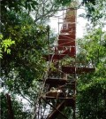 Micrometeorological tower in the transitional forest of Northern Matto Grosso, Brazil. (Credit: ULB/UFMT)