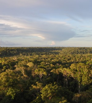 Canopy of the Amazon rainforest, with a storm cloud in the distance. (Credit: Marcelo Chamecki / Penn State University)