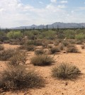 Arid desert. (Credit: Public Domain)