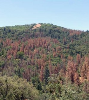 Scientists at Duke University are looking into the impacts of drought on forests. (Credit: Duke University)