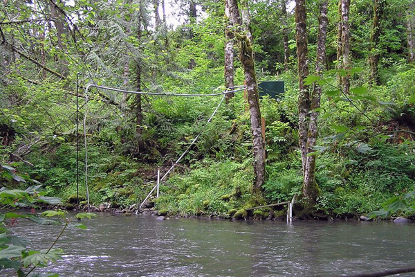 The station on the Deschutes mainstem captured the buffer effects on a large channel. (Credit: Weyerhaeuser)